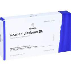Aranea diadema D6 Weleda 8 Amp.
