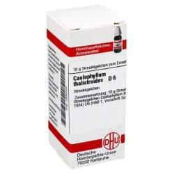 Caulophyllum thalictroides D6 DHU Glob. 10g